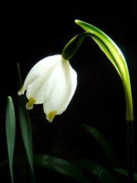 Inspirational photo snowflake flower