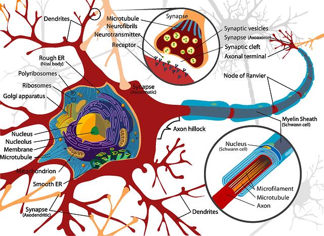 Nerve - graphic image