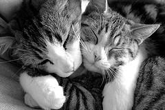 [Image: KittenhugsbyHdO_HeleneFlickr.jpg]