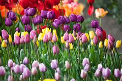 Garden by Informatique