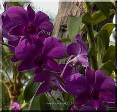 Purple Flowers courtesy of Travlinman43 Flickr