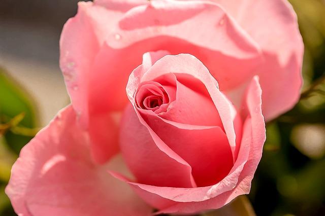 Inspirational photo rose